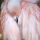 Flamingo #2 by ALICIABOCK