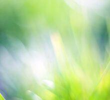 Beautiful green bokeh abstract background by Anna Váczi