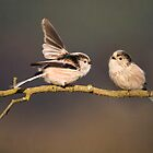 No,I won't get off your twig !! by M.S. Photography/Art