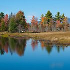 Foliage Reflections by Susan R. Wacker