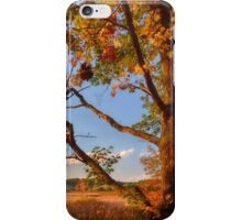 A Tree's View of Autumn on the Marsh iPhone Case/Skin