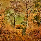 The Trail Out Back by Vickie Emms