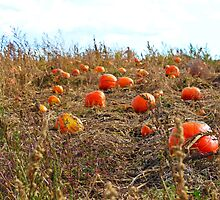 Pumpkin Patch by MStumbrie