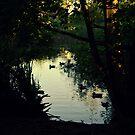 pond in the twilight by Savannah Regier