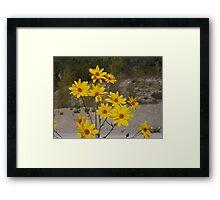 .....yellow flowers for you. italia - europa -..my beloved Anna ! .adorata Anna sei solo  tu...annamaria.  - 3500 visualizzaz.2014.FEATURED RB EXPLORE 15 GENNAIO 2012-- Framed Print