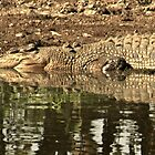 Crocodile and his reflections by myraj