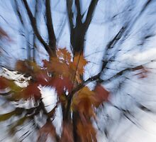 Abstract Impressions of Fall - Maple Leaves and Bare Branches by Georgia Mizuleva