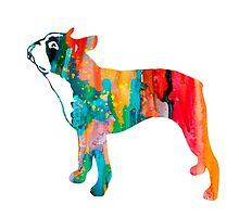 Boston Terrier  by Watercolorsart