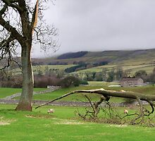 The Lightning Tree  - Wensleydale  by Colin J Williams Photography