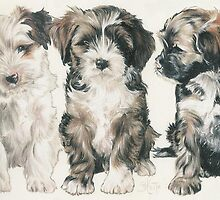 Lhasa Apso Puppies by BarbBarcikKeith