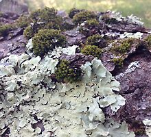 Lichen & Moss Photography by mikethefanman