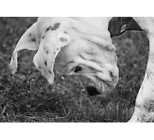 Puppy Discovers A Bug... Photographic Print