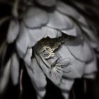 Epiphyllum oxypetalum II by Susan Littlefield