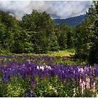 Lupine Impressions by Wayne King