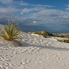 Long Shadow of the Yucca by Susan See