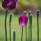 Flowers of Grace By Lorraine McCarthy by Lozzar Flowers & Art