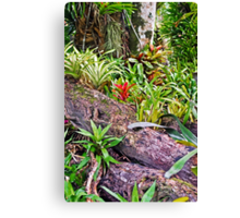 Tropical Fernery Nook Canvas Print