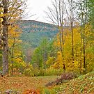 Fall in Vermont by Carolyn Clark