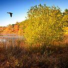 Hammond Pond Reservation by LudaNayvelt