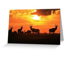 Red Hartebeest - Freedom is Golden - African Wildlife Greeting Card