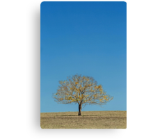 The Yellow Tree - Boonah Qld Australia Canvas Print