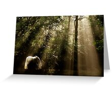 Horse In The Mist - Tranquility 2 Greeting Card
