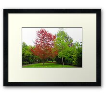 DAY 95 - (365 Day Project) 'ONE DAY AT A TIME'  Framed Print