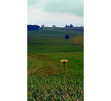 Dandelion with some scenery behind   landscape photography Photographic Print