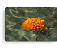 Floating Autumn - Chrysanthemum Blossom in the Fountain Canvas Print