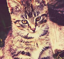 Pretty Striped Kitten 2 by AnnArtshock