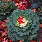 Cabbage And Leaves by Marie Van Schie