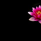Pink Water Lily 3 by Rebecca Cozart
