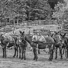 Pack Mules by Thomas Young