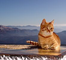 Tomcat Climber on Icy Desk (elevation: 2067 meters above sea level)  by Nedim Bosnic