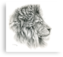 King - Lions profile g044 by schukina Canvas Print