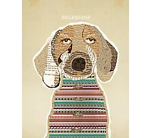 dachshund days Photographic Print