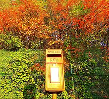 Mail Box And Autumn Leaves by Fara