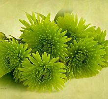 Green Spider Chrysanthemums by Sandra Foster