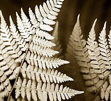 Monochrome Fern Leaves by Christina Rollo