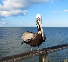 Pelican In North Carolina by Cynthia48