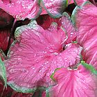 Pink Leaves by Cynthia48