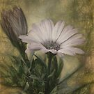 Vintage Daisy by Lois  Bryan