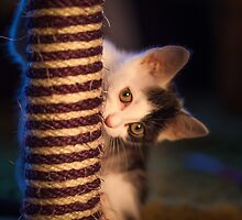 Kitten at play with scratch post by leightoncollins