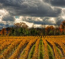 Autumn Storm Over Hidden Bench by Marilyn Cornwell