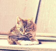 Retro Kitten Photo 3 by AnnArtshock