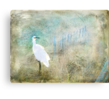 Fanciful and Free Canvas Print