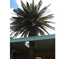 Roof Palm Photographic Print