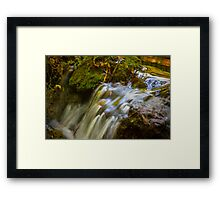 Almost Abstract in the Forest Framed Print