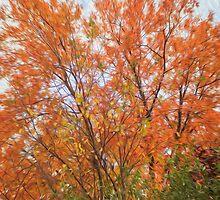 Fall by Marina Totino