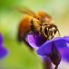 South Beach Bee by Dieter Tracey
